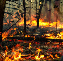 Fires ravaging the Amazon